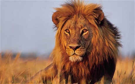 Chronic Pain - the Lion in the Room!