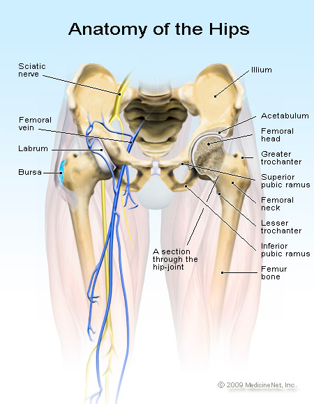 Anatomy of the hips - hip pain can be difficult to diagnose