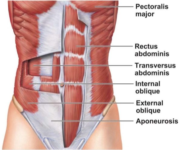 Core Muscle = strong back?